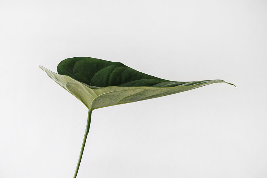PPT Design Concept: Greenery, Gardening, Botanic